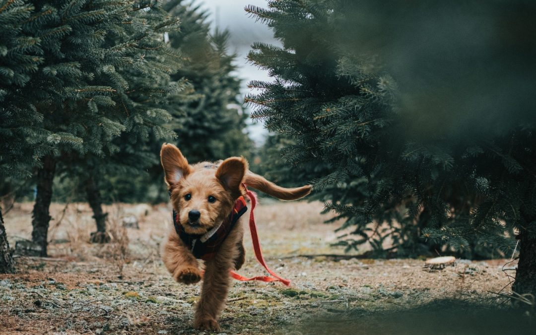 CBD and Its Benefits for Pets