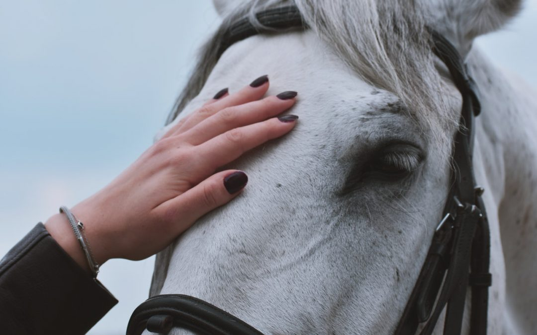 Why You Should Consider CBD For Horses