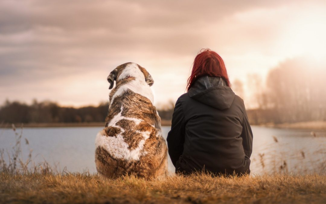 Does CBD Work the Same for Pets?